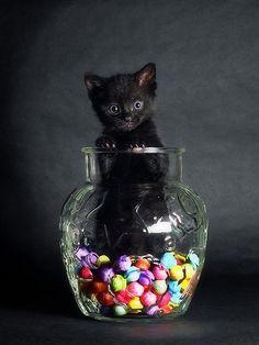 I love black cats!