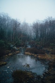 I've been to places like this...cool, dark, mysterious, silent...but places like this is where I've found the most peace and happiness...this is my therapy