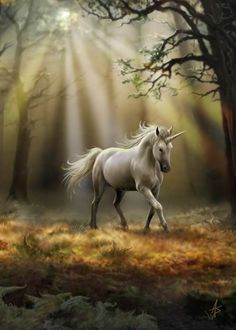 """Glimpse of a Unicorn"" blank card"