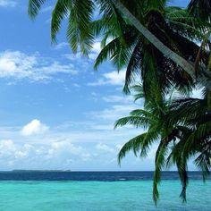 Palm tree breeze <3