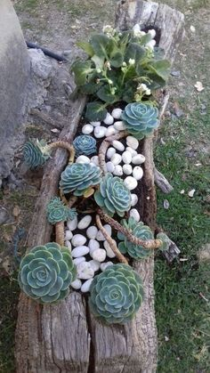 31 Wonderful Spring Garden Ideas For Front Yard And Backyard. If you are looking for Spring Garden Ideas For Front Yard And Backyard, You come to the right place. Here are the Spring Garden Ideas For. Succulent Landscaping, Succulent Gardening, Cacti And Succulents, Planting Succulents, Container Gardening, Garden Plants, Landscaping Ideas, Succulent Ideas, Growing Succulents