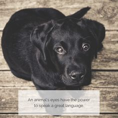 """#Chic4Dog #dogquote #dog - """"An animal's eyes have the power to speak a great language"""" M. Buber"""