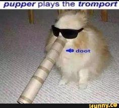 doggo memes - Google Search