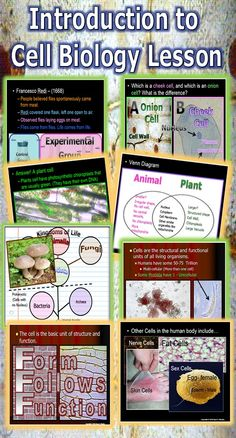 This is a fantastic lesson bundle that introduces your student to cellular biology. It begins exploring the characteristics of life, the needs of living things, looks at cheek and onion cell under the microscope, compares and contrasts plants and animal cells, and dives into the history of the cell theory. -Enjoy! Science from Murf LLC