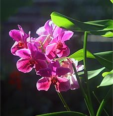 Lovely pink orchid flower from orchid-expert.com