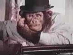 Choppers the PG Tips chimp is learning to be a monkey again