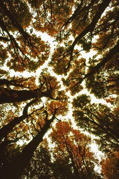 """ Keller Woodlands by (StephenHB) """