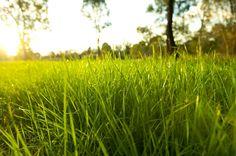 #hierba espesa, #temporada rural, #tierra verde, #jardín fresco, #escarcha, #medio ambiente, #rocío, #gotas, #brillante, #color, #hierba, #naturaleza, #macro