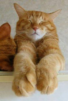 139 best funny cat poses images  cats crazy cats cute cats