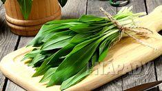 Bršlice kozí noha (Aegopodium podagraria) je pro zahrádkáře zákeřný plevel, který se snad ani nedá vymýtit, al | Prima nápady