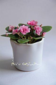 Rob's Twinkle Pink, African Violet, Saintpaulia, Grown by Boa Linn, photo taken by Boa Linn.
