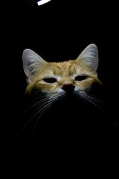 That Look, Cats, Photography, Animals, Gatos, Photograph, Animales, Animaux, Fotografie
