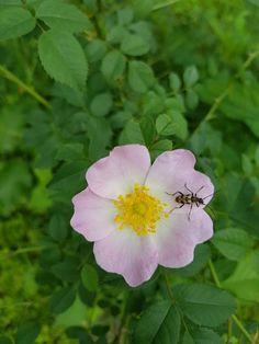 Flora, Plants, Plant, Planting