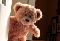 Teddy Bear Meets Best Friend -- This stop action animated teddy bear just won the internet's heart.