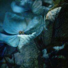 .❈ Fleurs Foncées ❈ dark art photography flowers & botanical prints -