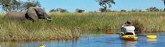 Canoeing, The Okavango Delta, Botswana Okavango Delta, Canoeing, African Safari, Safari Animals, Elephant, Park, Big, Travel, Viajes