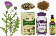 Milk Thistle - Herbs for Dogs and Cats In this article… 1. Milk Thistle 2. Health Benefits 3. Cautions 4. Side Effects 5. Drug Interactions 6. General Guidelines for Daily Herbal Intake