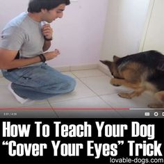 how to train your dog - Please Share This Page: Photo – www.youtube.com/watch?v=yAgJlVRcPQk This video by Training Positive is a very well-presented step by step process on teaching a dog to cover its eyes. Take note though that this is not an overnight command that your dog can learn. This takes time and for some dogs, it might require weeks before ….  how to train your dog  |  dog... Training Your Dog, Dog Training Tricks, Safety Training, Dog Commands Training, Agility Training For Dogs, Training Center, Leash Training, Training Classes, Hündchen Training