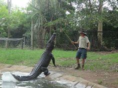 Krokodil Australien