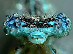 Dew covered dragonfly - Miroslaw Swietek