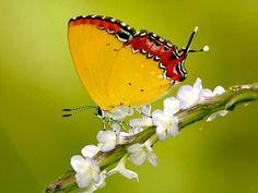 Wildlife Sanctuaries in Meghalaya, India, Forests in meghalaya