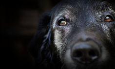 Grey Muzzle: Helping Homeless Senior Dogs