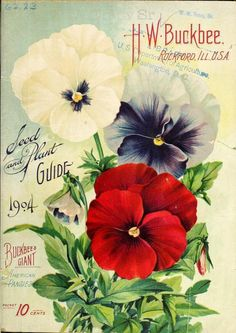 Pansies on the cover of an old seed catalog, 1904