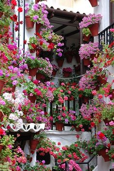 Courtyard garden in Cordoba, Spain. In early May, people proudly decorate their patios with flowers to compete for the city's 'most beautiful courtyard' contest. Jardin Decor, Pot Jardin, Italian Garden, Window Boxes, Dream Garden, Garden Inspiration, Beautiful Gardens, Beautiful Life, Stunningly Beautiful