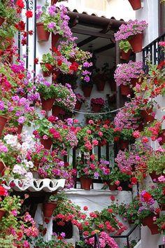 """Patio festival"" time in Cordoba, Spain-- amazing, amazing color."