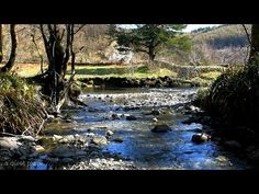 Relaxing Nature Sounds With Gentle Piano Music ( River, Birds Singing ) - YouTube