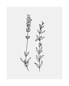 I thought a rosemary tattoo might be nice? Rosemary helps/is a symbol of memory. so we never forget each other? Dainty Tattoos, Flower Tattoos, Simple Flower Tattoo, Small Tattoos, Piercing Tattoo, Piercings, Rosemary Tattoo, Handpoked Tattoo, Plant Tattoo