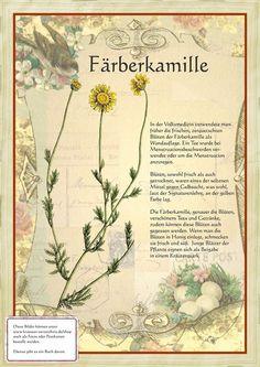 Färberkamille http://www.kraeuter-verzeichnis.de/