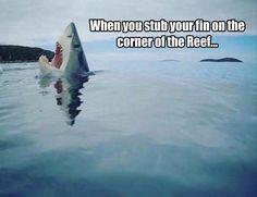 HATE THAT! #Sharks #StubYourToe #StubYourFin