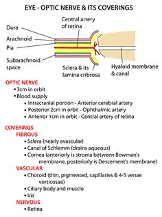 Instant Anatomy - Head and Neck - Areas/Organs - Eye & orbit - Coats and optic nerve