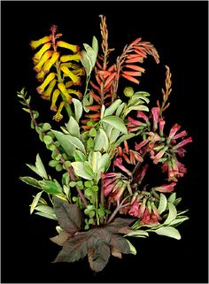 Les Fleurs Multicolores, Multicolscanner photography, Botanical... - Scanner Photography By Ellen Hoverkamp