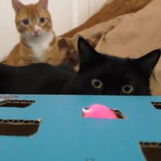 5 Life Hacks Fur Cat Owners - Cole & Marmalade Whack-a-mouse game