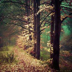 Portugal : Fotografia : almost... fireflies.
