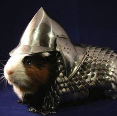 Funny pictures about Guinea pig suit of armor. Oh, and cool pics about Guinea pig suit of armor. Also, Guinea pig suit of armor. Hamsters, Rodents, Guinea Pig Costumes, Pet Costumes, Guinea Pig Clothes, Helmet Armor, Suit Of Armor, Body Armor, Funny Animals