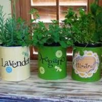 Grow Your Own Indoor Herb Garden