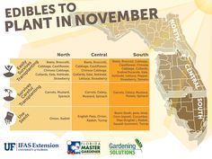 Edible Gardening Graphic listing fruits and vegetables to plant in November for Florida, see EDIS pub linked below for document -