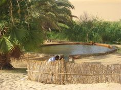 Siwa Oasis, amazing this can exist in the middle of a desert.