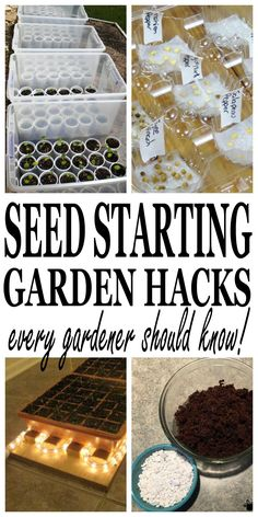 Seed starting hacks every gardener should know and every gardener can use. When it comes to growing a garden, watching a seed grow is just as satisfying as eating fresh produce from the mature plants. Start this years gardening adventure with some DIY seed starting tricks that are quick and easy. Plus, usually seed starting...