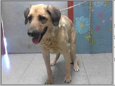 No time for elderly dog who is heartbroken after surrender at 13 years of age   8/2/14 Lancaster Ca