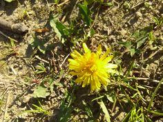 Foto:Daniella M. Spring, Plants, Flora, Plant, Planting