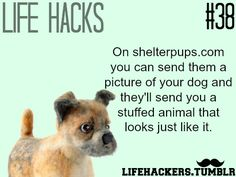 "Get a stuffed animal that look like your dog More life hacks at ""Life hackers"" ,Click here"