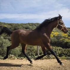 Alleviamo #cavalli di #razza #araba #purosangue nati e cresciuti qui in #Sardegna 🐴🏇 Venite a trovarci www.thelivingfarm.it/allevamenti 🚩 #sardegna #igersardegna #cavalli #animali #beautiful #istagood #benessere #natura #love #horse #followme #ridinghorses #cagliari #istalike #nofilter #sun #photo