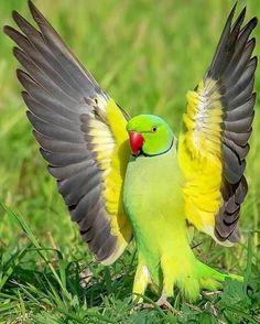 900 Ideas De Aves De Colores En 2021 Aves De Colores Aves Pájaros Hermosos