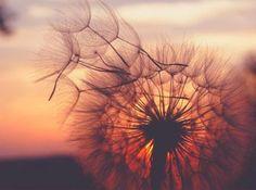 Жизнь — борьба, в борьбе — счастье.