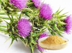 revital U Tea has a combination of all natural plant based ingredients including a Probiotic & Cleanse blend, Liver Detox Blend and Ayurvedic Reset Blend Milk Thistle Extract, Taraxacum Officinale, Healthy Liver, Liver Detox, Skin Care Treatments, Medicinal Herbs, Detox Tea, Plant Based, Cure