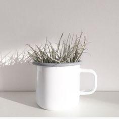 [Pflanzenliebe] ↠ Luftpflanze im Becher (Barefoot Living) ♡
